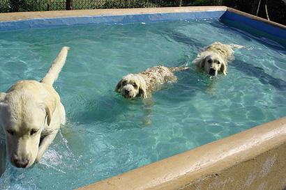 Centro canino miraflores - Piscinas para perros ...